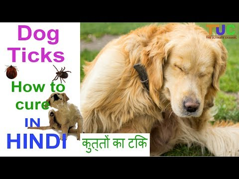 Ticks In DOGS | How To Cure It In HINDI | Popular Dogs | The Ultimate Channel