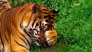 Красивое видео , природа , животные. Такси Петрович в Россоши rossosh-taxi.ru