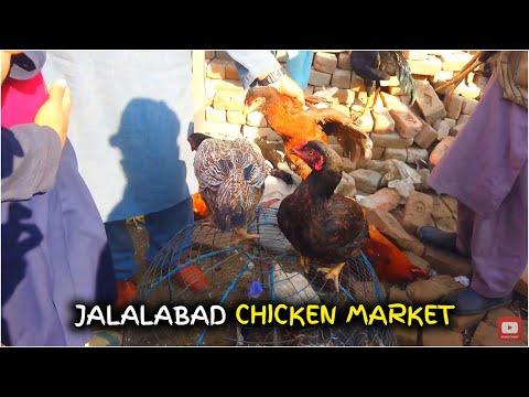 Chicken Market | Jalalabad Afghanistan | Streetfood Jalalabad City 2019 full HD video