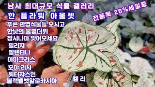남사 최대 식물갤러리#한플라워아울렛 뜨거운여름 시원스럽…