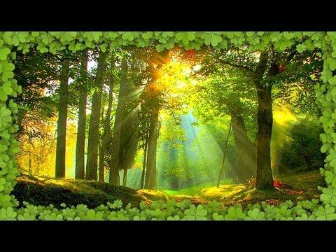 Ϡ Sound Therapy ~ Summer Forest ~