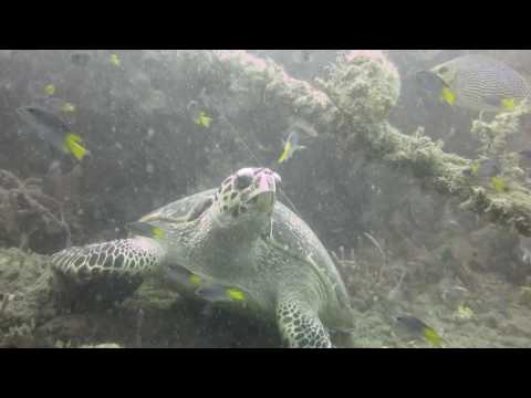 Padi Open Water Diver March 2017