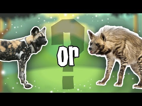 Animal Jam Update: WHAT IS THE NEW ANIMAL?
