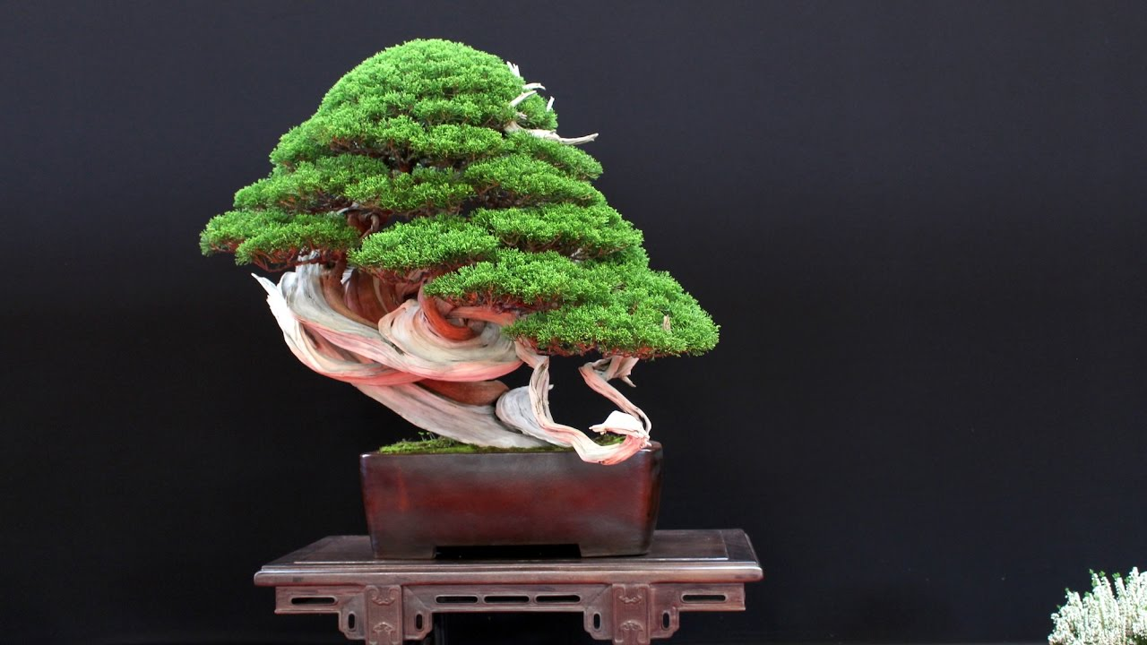 The Most Beautiful Bonsai Trees You