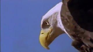 Don't Say Goodbye 🐾🐅🕊 (Saving Species Documentary) ♦NatGeo♦