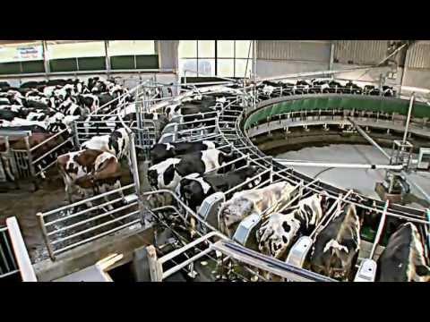 Größter Kuhstall Deutschlands