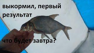 рыбалка на реке кормлю леща и чебака второй день уже есть результат буду кормить каждый день