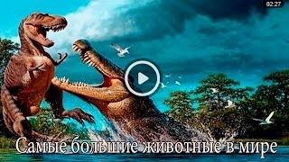Самые большие животные в мире-Рicture Show