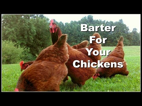 BARTER for Your Chickens!