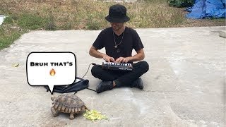 Making Beats With Turtles