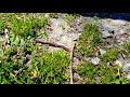 Earthworm sightings today!