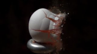 Paintball Gun vs Egg in Slow Motion | Slow Mo Lab