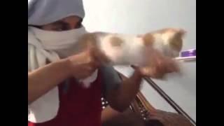 gatto mitragliatrice