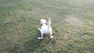 朝の公園で最近はこんなことして遊んでいます。