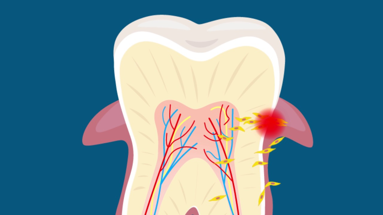 Chew On This Your Teeth Might Be Able To Help Grow New Tissues
