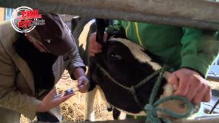 Qu'est-ce qu'un vétérinaire rural ?