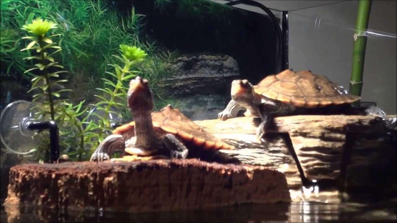 Aquatic Turtle Terrarium : Turtles Terrarium - Exo Terra Setup - 90l. - YouTube