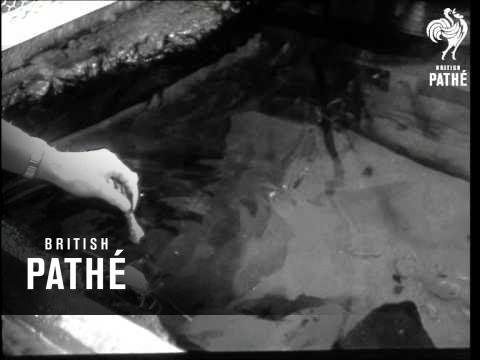 Amsterdam Aquarium - 75 Th Anniversary (1958)