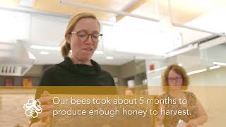 Rooftop Farm: BeeMC Honey harvest!