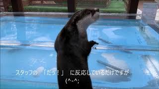 きらりくんのだるまさん(^^)/ (伊勢シーパラダイス)