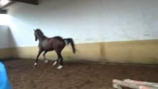 Прыжки на свободе мерин от Сильвио.wmv