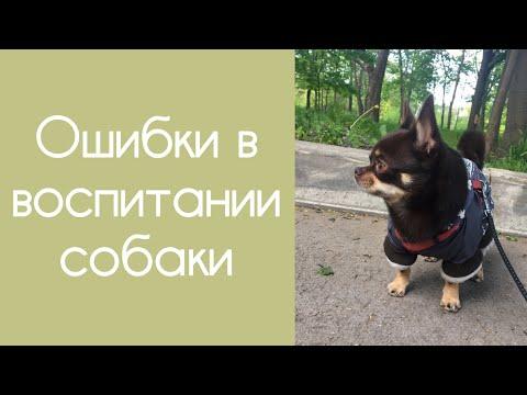 Вопрос: Потемнеет ли нос собаки в месте зажившей ссадины?