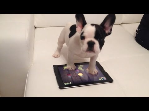 dogs-playing-fruit-ninja