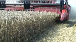 moisson du bl wheat harvest case ih 2388