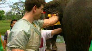Elefanten Wichser - TV total classic