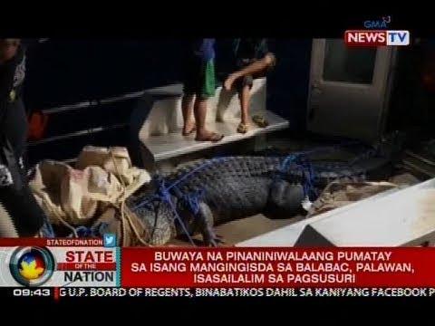 SONA: Buwaya na pinaniniwalaang pumatay sa isang mangingisda sa Balabac, Palawan, nahuli