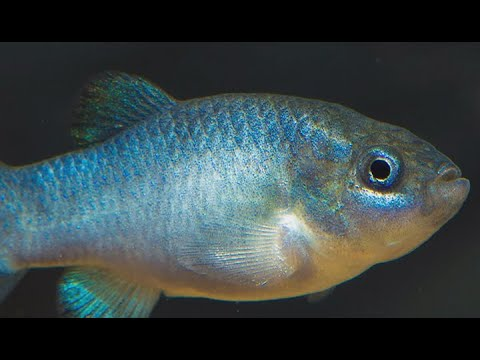 VIDEO: Earthquake Caught On Camera That Monitors Devils Hole Pupfish