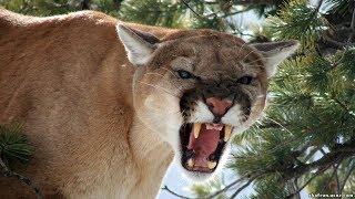 Животный мир День и ночь Самый быстрый Степная рысь Прыжок хищника Цель атаки Мощь кошки