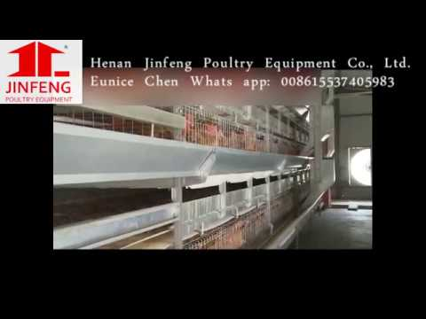 Rear broiler chicken cage China Supplier Poultry Farm Equipment