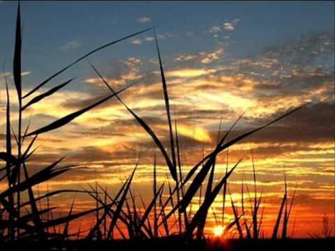 Jens Buchert-Bamboo Sun