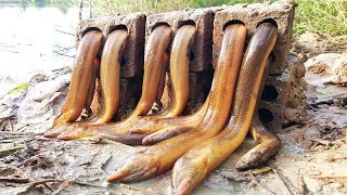 Amazing Smart Boy Make Eel Trap Using Bricks and Deep Hole - How To Catch Eels With Trap