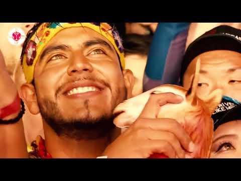Without You - David Guetta | Tomorrowland 2019 😍