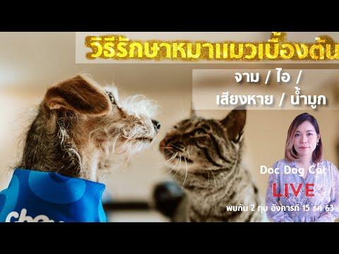 วิธีรักษาเบื้องต้น เมื่อน้องหมา น้องแมว จาม ไอ น้ำมูกใส เสียงหาย จากอากาศหนาวในช่วงนี้
