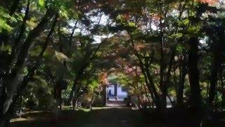 2015 12 浄住寺 京都紅葉 No3