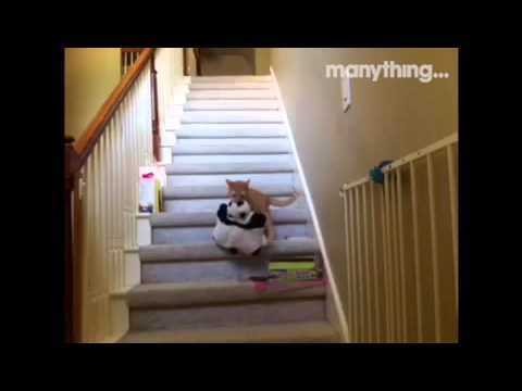 Cute cat Cheetah gets caught stealing the cuddly toys