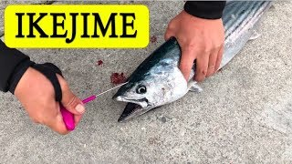 The IKEJIME Compilation. The Right Way to Kill a Fish.