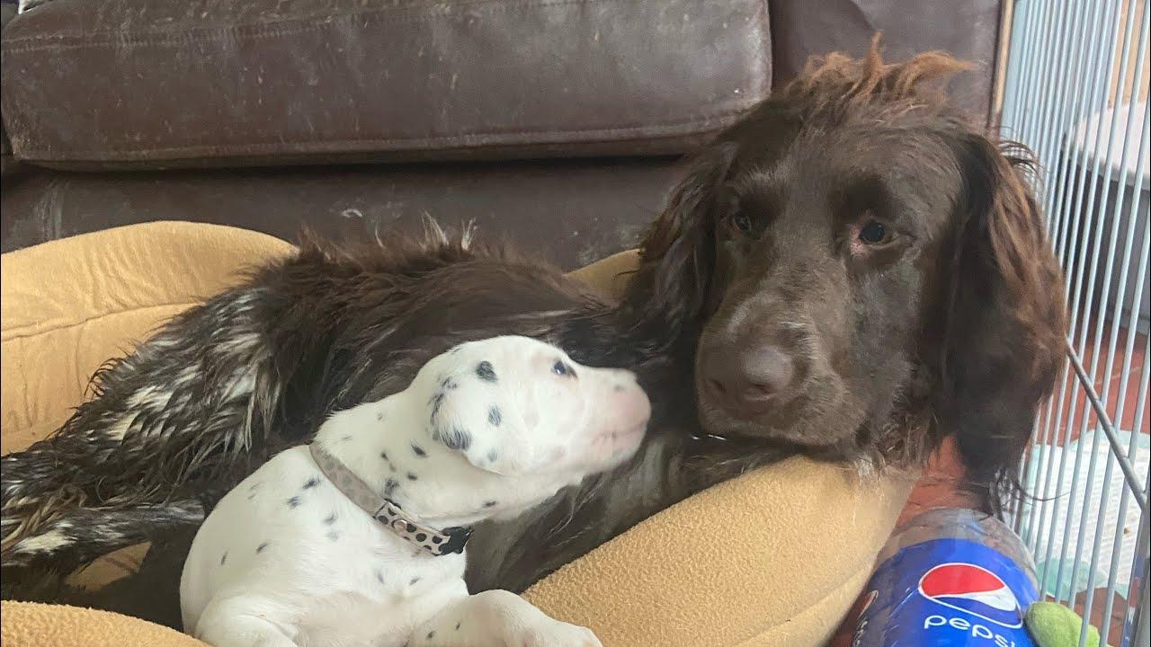 Harper tries puppy sitting