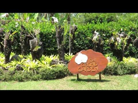Inside Bali orchid garden,  Indonesia
