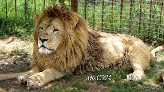 Сафари-парк львов