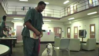 """jail Dogs In 1c"" Webisode 2  Catching Up With The Dogs"