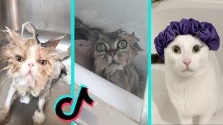 Cat vs Bath time  Funny Cats Bathing Compilation | Tiktok Compilation