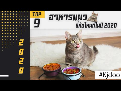 อาหารแมว ยี่ห้อไหน ดีที่สุด ปี 2020 ถูกใจน้องแมว กินยังไงก็ไม่เบื่อ ประโยชน์เพียบ