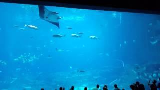 Biggest aquarium in the world in Georgia Aquarium.