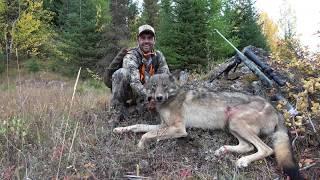 WESTERN WOLF HUNTING 8