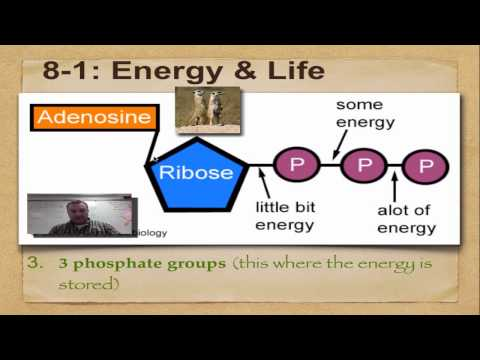 Chapter 8 Part 1 Energy Life YouTube