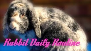 Rabbit Daily Routine